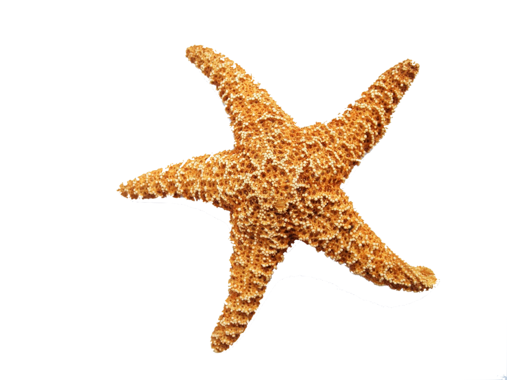 starfish dermatology medical